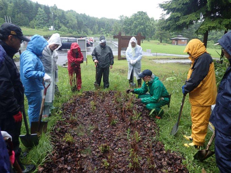 Image of 森づくりボランティア事業に参加しました 1