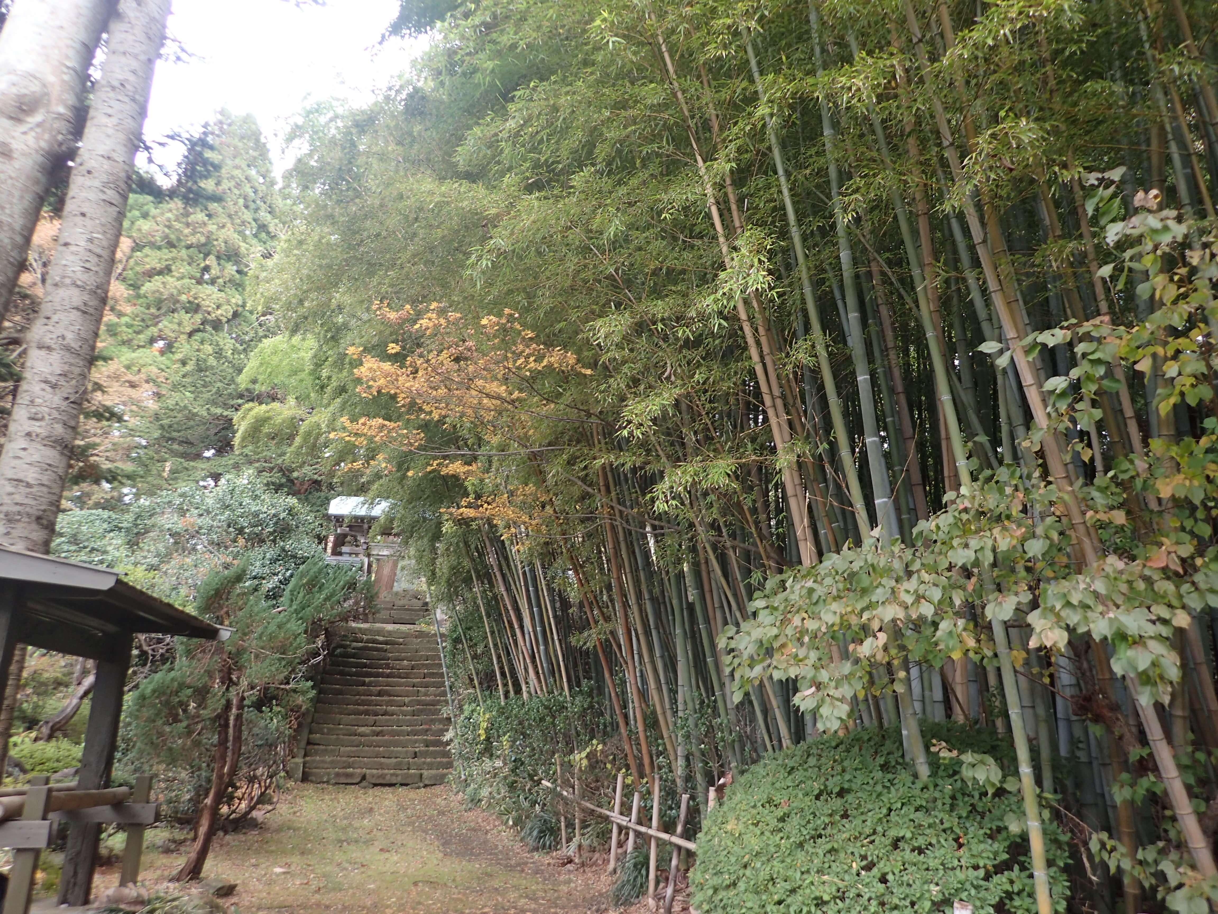 Image of 北海道松前町法幢寺での孟宗竹林での間伐等 1
