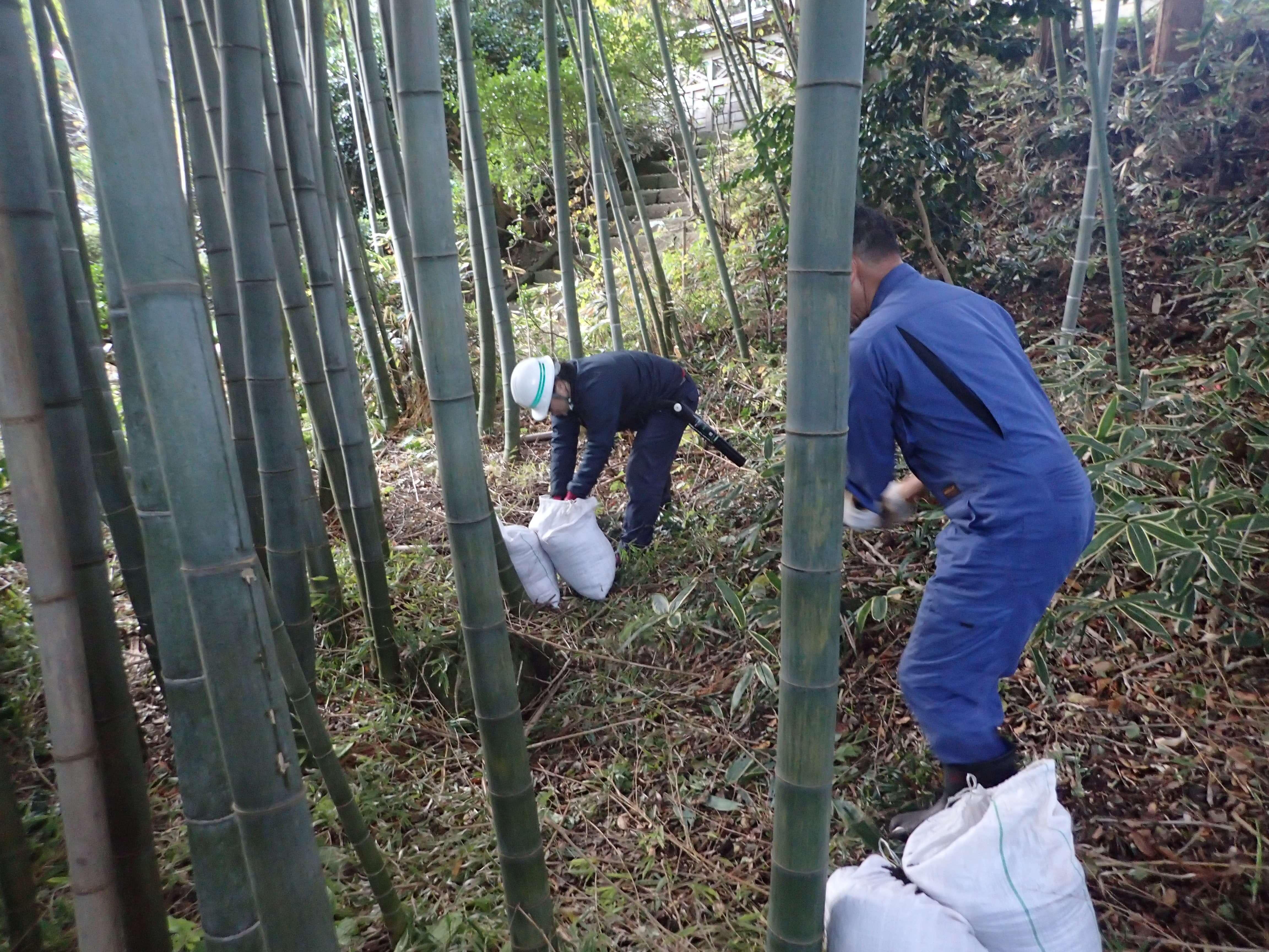 Image of 北海道松前町法幢寺での孟宗竹林での間伐等 6