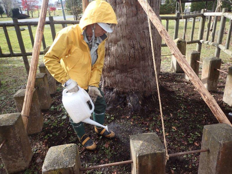 Image of 北海道当別町開拓記念樹イチイへの「協働」での保全作業 8