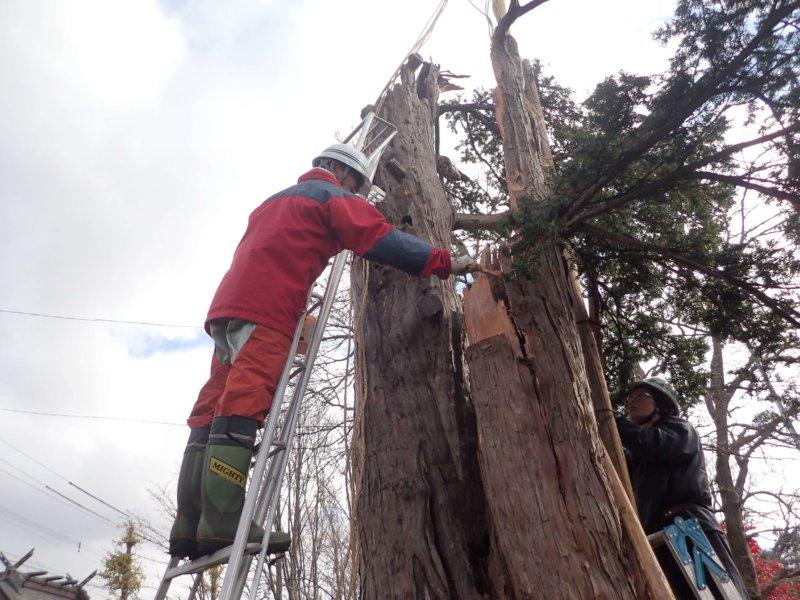 Image of 北海道当別町開拓記念樹イチイへの「協働」での保全作業 6