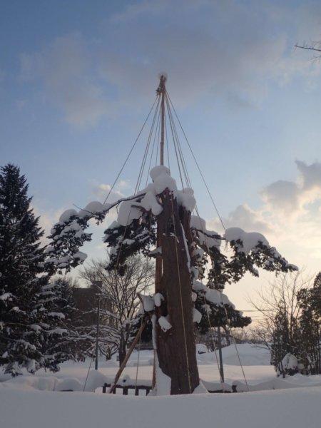Image of 北海道当別町開拓記念樹イチイへの「協働」での保全作業・その2 1