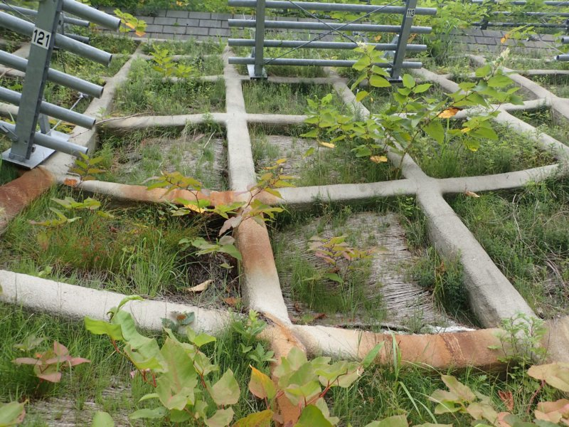 Image of 特殊土壌:知内町小谷石中の沢での酸性硫酸塩対策緑化工試験施工の調査 5