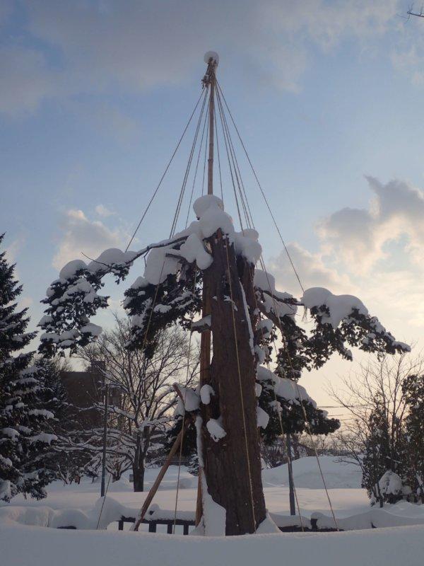 Image of 北海道当別町開拓記念樹イチイにおける「協働」での保全作業・その3 2