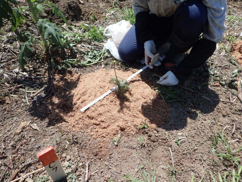 Image of 林業の軽労化~下刈作業軽減化対策試験地の設定と測定 2