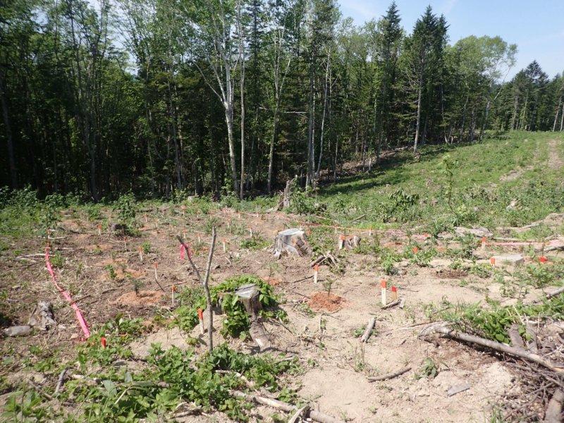 Image of 林業の軽労化~下刈作業軽減化対策試験地の設定と測定 3