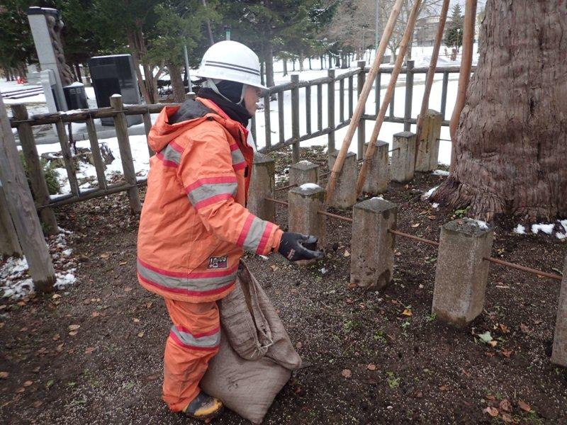 Image of 北海道当別町開拓記念樹イチイにおける「協働」での保全作業・その3 5