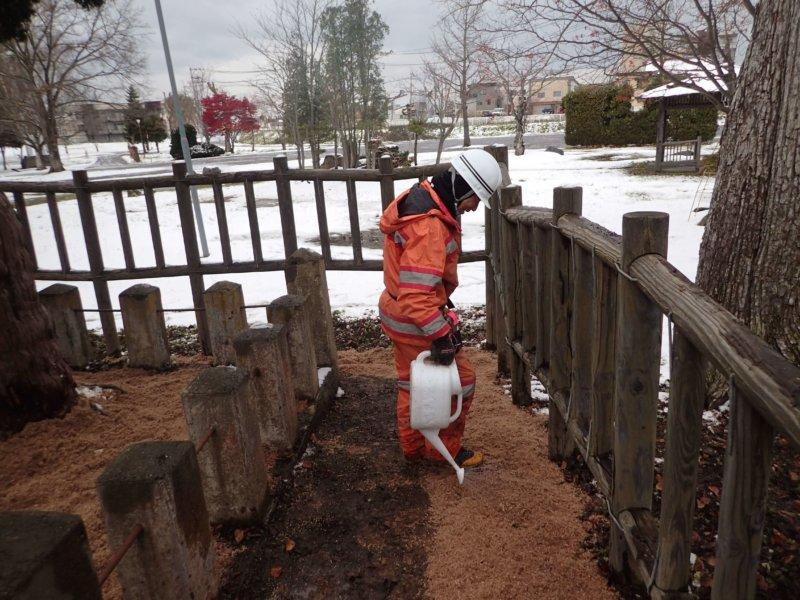 Image of 北海道当別町開拓記念樹イチイにおける「協働」での保全作業・その3 8