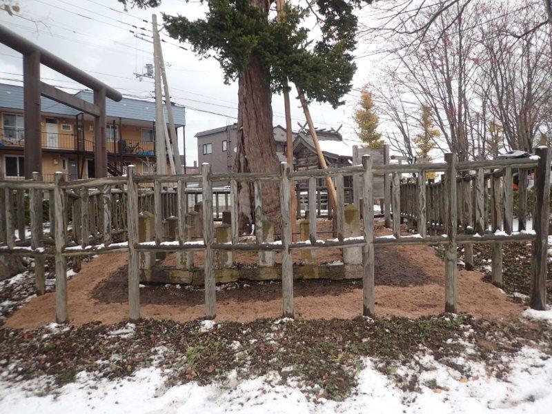 Image of 北海道当別町開拓記念樹イチイにおける「協働」での保全作業・その3 9