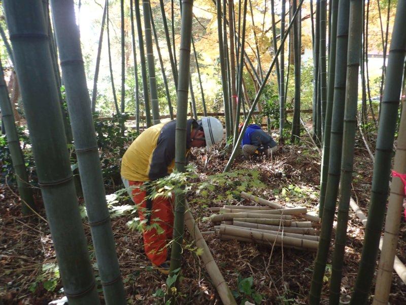 Image of 北海道松前町法幢寺での孟宗竹林での間伐等・その2 3