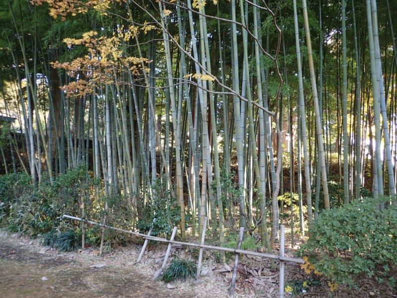 Image of 北海道松前町法幢寺での孟宗竹林での間伐等・その2 2