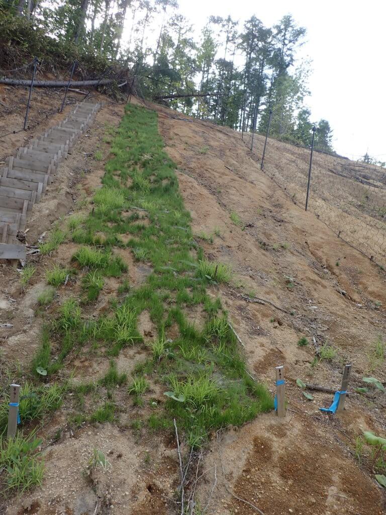 高丘8 緑化状況 EBA(左)、MPA(右)  2020.06.04