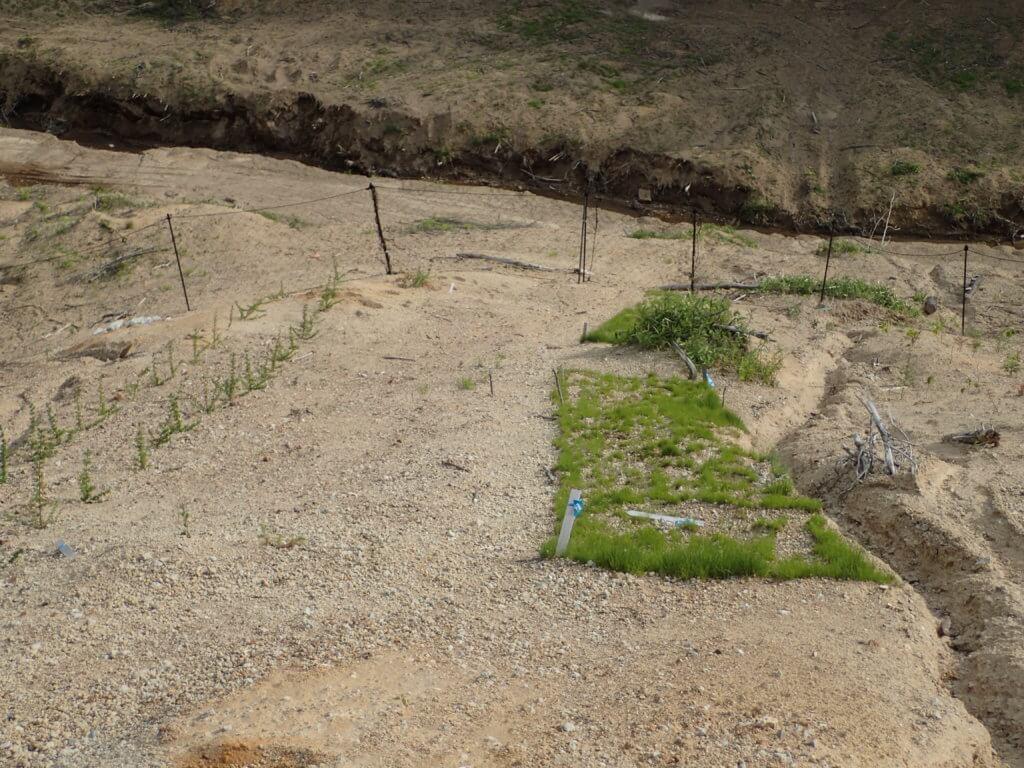幌内 緑化状況(斜面上部から撮影)MPA(左)、EBA(右)  2020.06.04