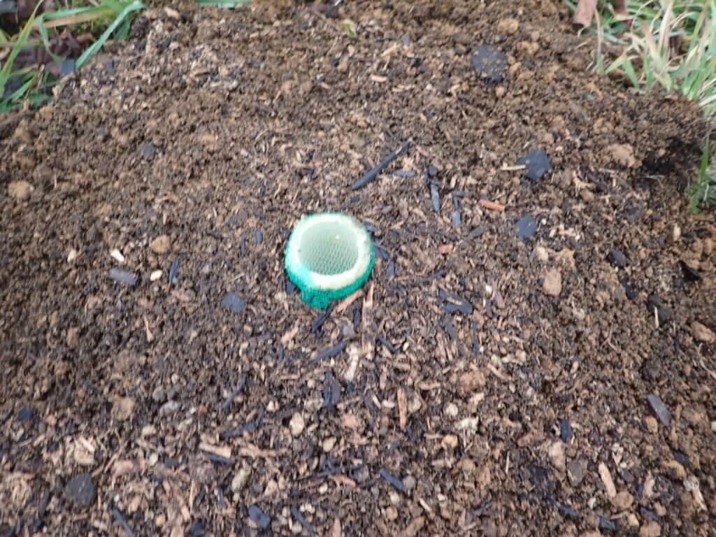 割竹縦穴式土壌改良法の地上部